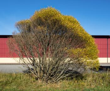 Salix in Tuntorp