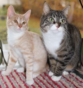 Salvia & Miisa