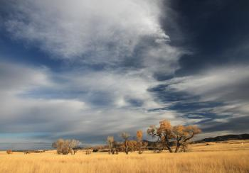 SAN RAFAEL VALLEY GRASSLANDS, SE of Patagonia, scc, az (11-24-11) -01