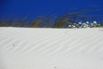 Sandy beach with green plants