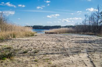 Sandy shore of a forest lake with reeds in the background of blue sky