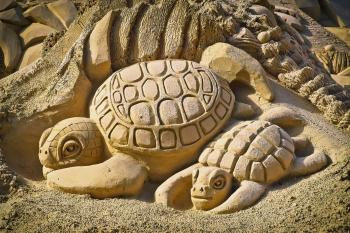 Sandy Turtle