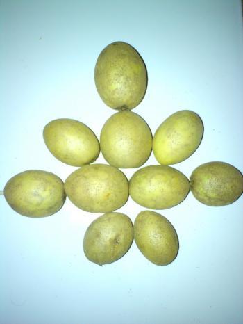 Sapodilla fruit garnish