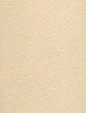 Scanned Scrapbook Paper