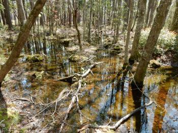Scene bottomland hardwood wetland Carolina beach state park ncwetlands KG (5)