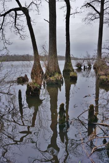 Scene Chowan Swamp Gamelands ncwetlands KG (12)