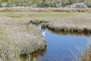 Scene Fort Fisher SRA ncwetlands AM (10)