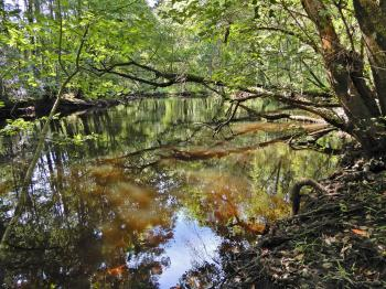 Scene Lumber River SP Chalk Banks ncwetlands KG (45)