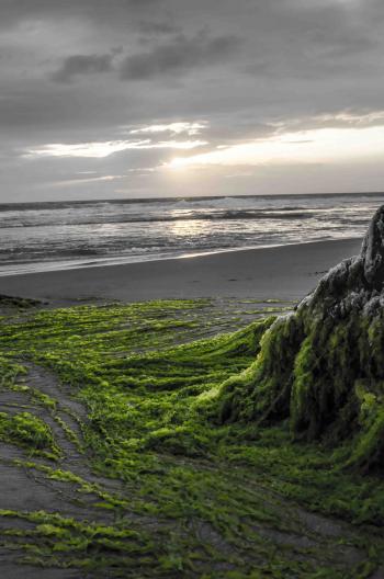 Sea scape  in Kovalam beach