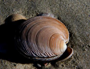 Sea Shells (16)
