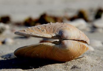 Sea Shells (20)
