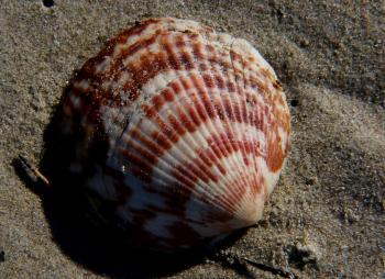 Sea Shells (21)