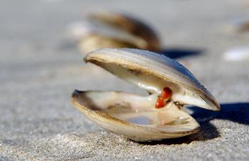 Sea Shells (26)