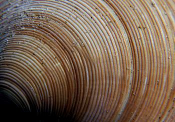 Sea Shells (30)