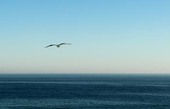 Seagull flying in the horizon