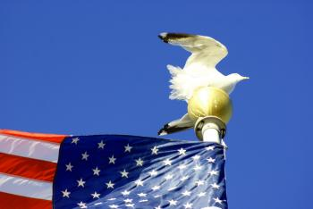 Seagull On Flagpole