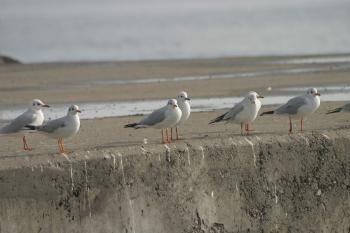 Seagull waiting