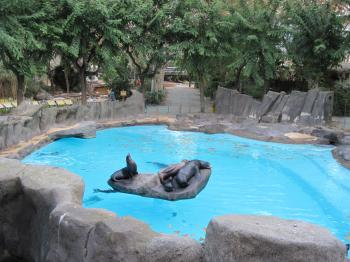 Seal family in the Barcelona Zoo
