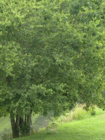 Seat Under Tree