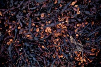 Seaweed Texture