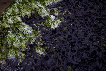 Seeweed on Rock Texture