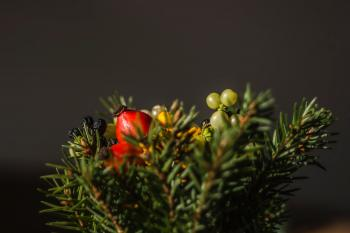 Selective Focus of Red and Green Berries Fruit