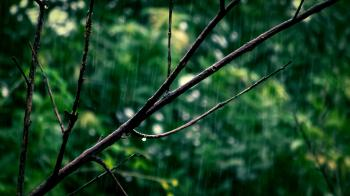 Selective Focus Photo Of Tree Branch