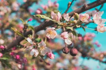 Selective Focus Photo of White and Pink Petaled Flowers