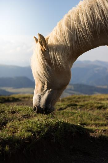 Selective Focus Photo of White Horse