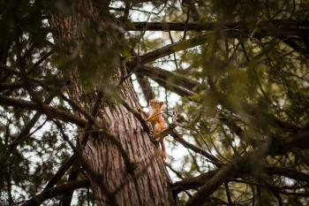 Selective Focus Photograph of Squirrel on Trunk