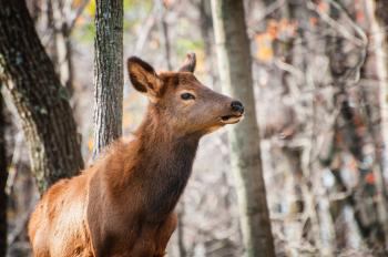 Selective Focus Photography of Brown Deer in Forest