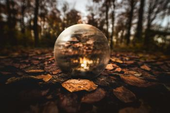 Selective Focus Photography of Clear Glass Ball on Brown Leaves on Ground