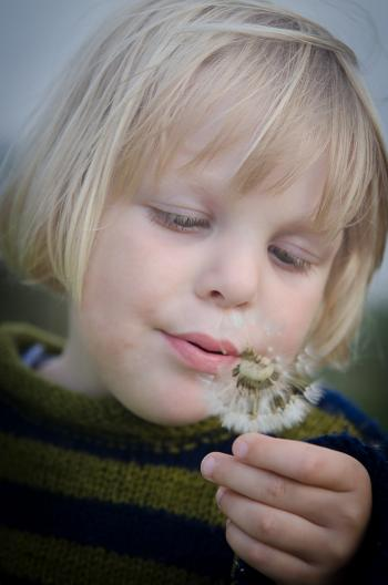 Selective Focus Photography of Girl in Green and Black Striped Sweater Holding and Blowing Dandelion