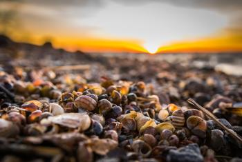 Selective Focus Photography of Snail Shells