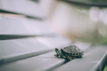 Selective Focus Photography of Turtle on Bench