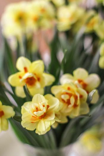 Selective Focus Photography of Yellow-and-orange Petaled Flowers