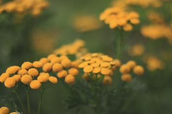 Selective-focus Photography of Yellow Flowers
