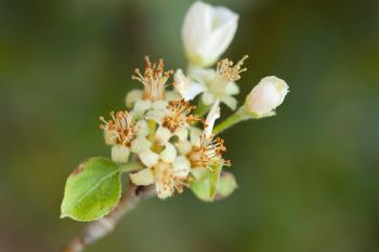 Selective Photography of White Flower