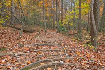 Seneca Fall Forest Trail - HDR