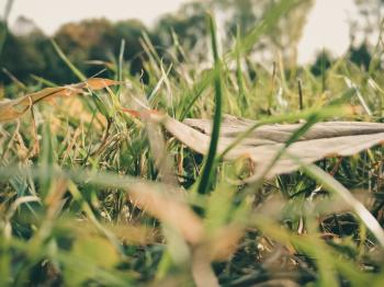 Sepia Photography of Grass during Daytime