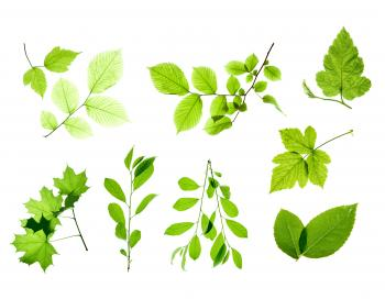 Set of Isolated Leaves