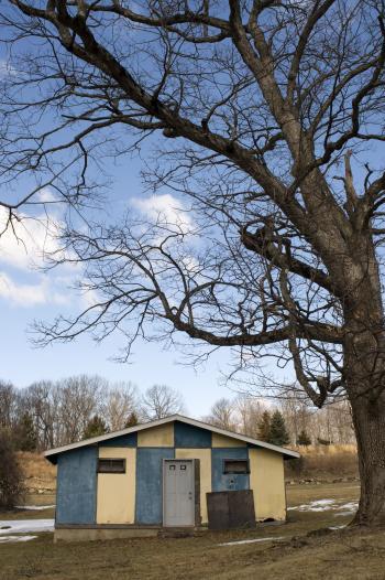 Shack and Tree