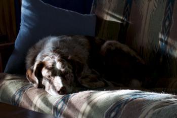 Shadow Snooze (1: Color)