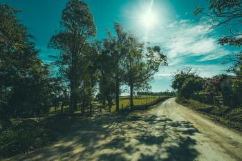 Shadows of Tree on Road