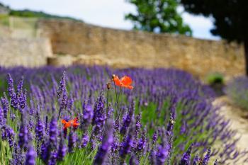 Shallow Focus Lens Photo of Purple Flower