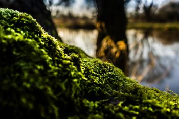 Shallow Focus of Green Moss