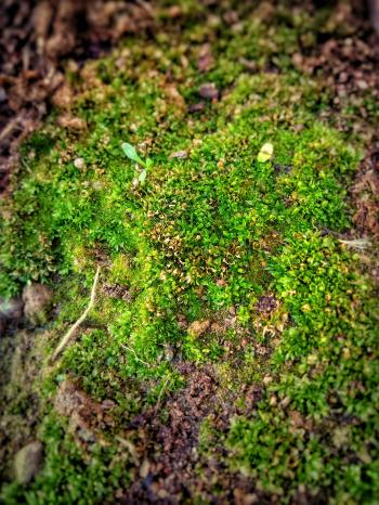 Shallow Focus Photo of Green Moss