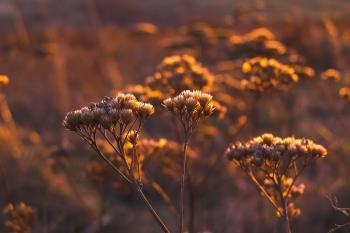 Shallow Focus Photo of White Petal Flower during Orange Sunset
