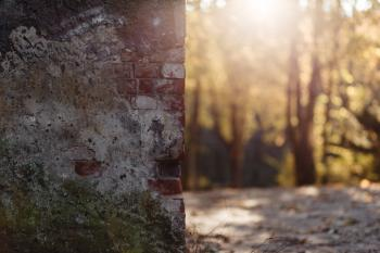 Shallow Focus Photography of Brown and Gray Bricked Wall