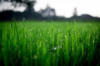 Shallow Focus Photography of Green Grasses during Daytime